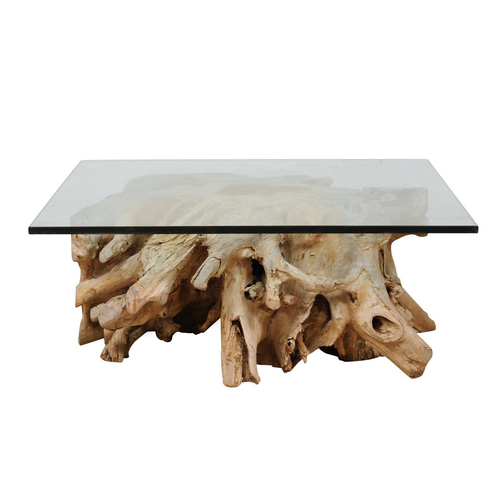 A Tree Root & Glass Coffee Table