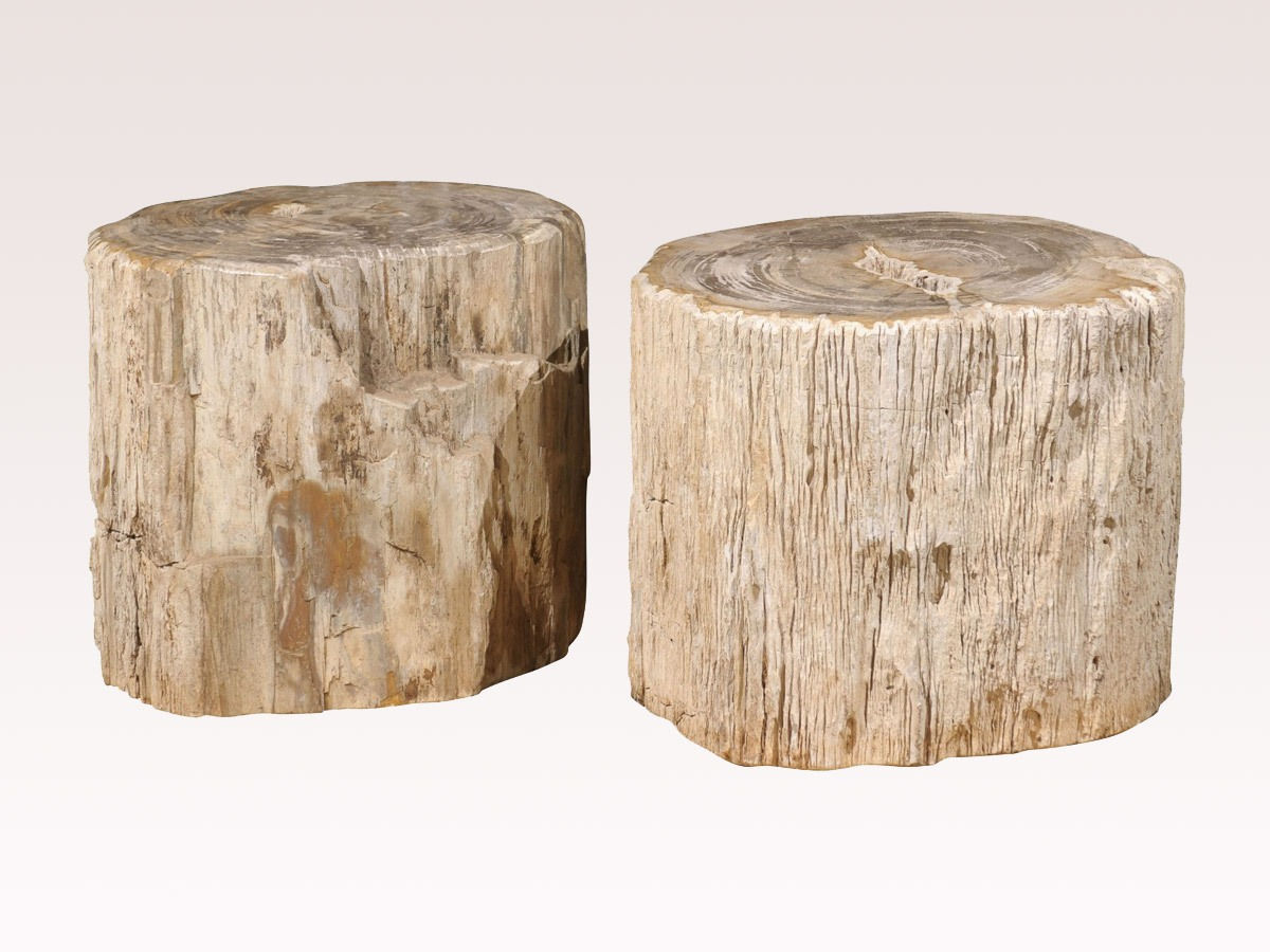 Petrified Wood Drinks Tables